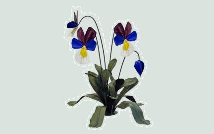 2-pansies-lichtgroen
