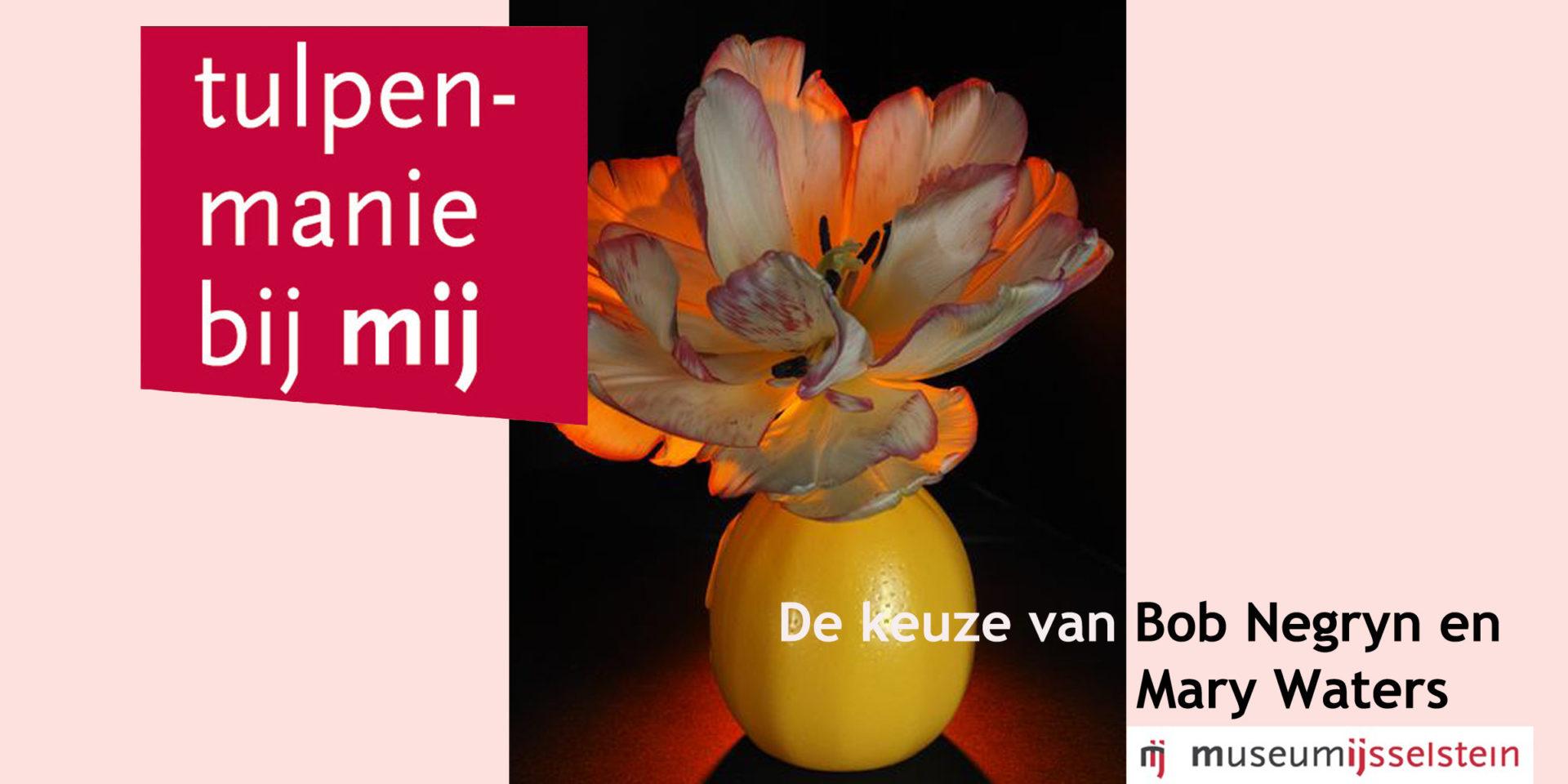 2-tulpenmania-nieuws-binnen
