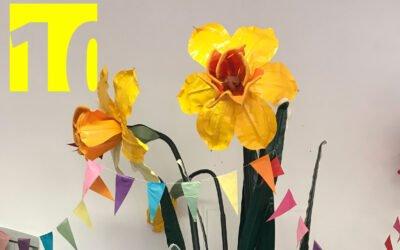 10th anniversary: daffodil give away